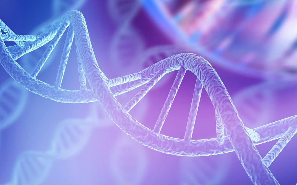 تقرير عن الوراثة الجينات الكروموسومات المادة الوراثية ماي بيوت