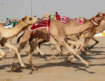 الرياضات التراثية في الامارات