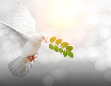 حمامة السلام