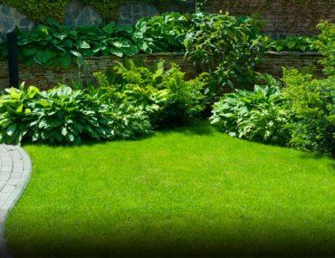 تنسيق حديقة منزلية