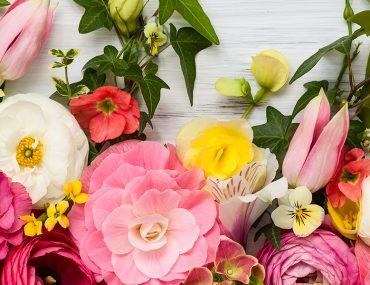 محلات الزهور في عجمان