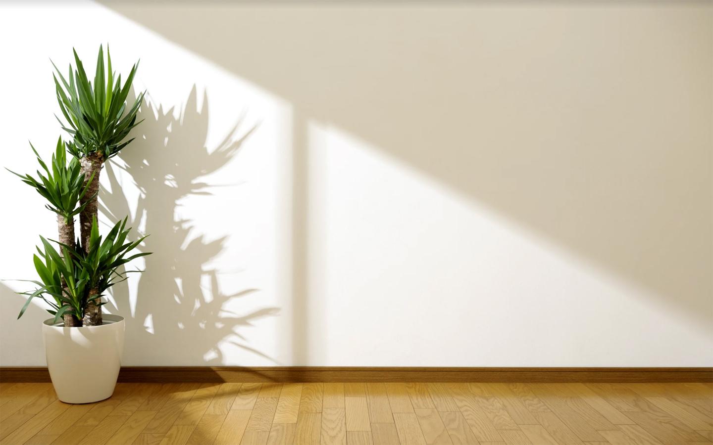 القيام بجولة سريعة في المنزل لتحديد الغرف التي تتعرض لدرجة كافية من أشعة الشمس وأيها تحتاج إلى المزيد