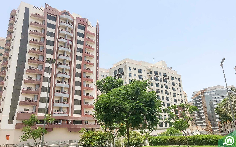 UAE Horse race