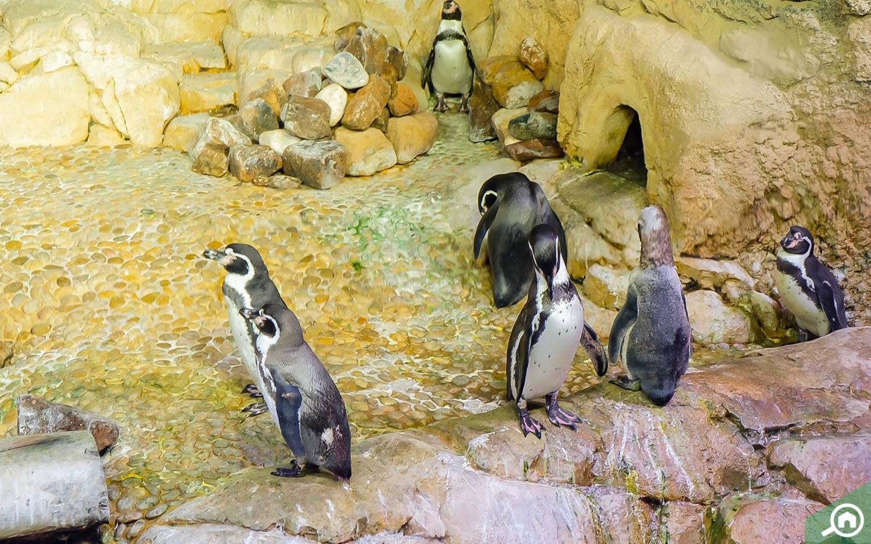 Bunch of penguines in Dubai