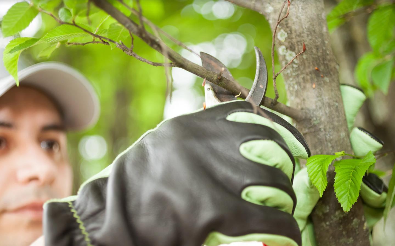 ضرورة تلقيم النباتات والأشجار الخارجية الموجودة في حديقة المنزل باستمرار
