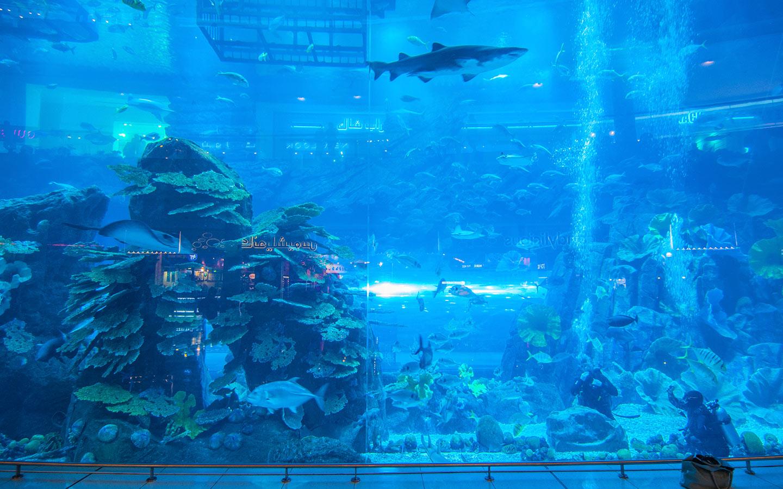 دبي مول، أكبر وجهة للتسوق في العالم. ينفرد بمعالم هامة مثل الأكواريوم