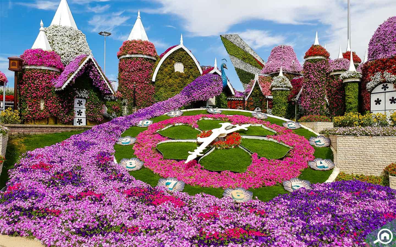 Floral Clock at the Dubai Miracle Garden