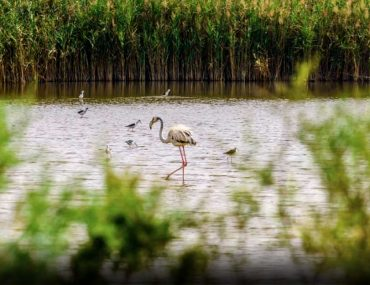 A flamingo at an Abu Dhabi Wetland
