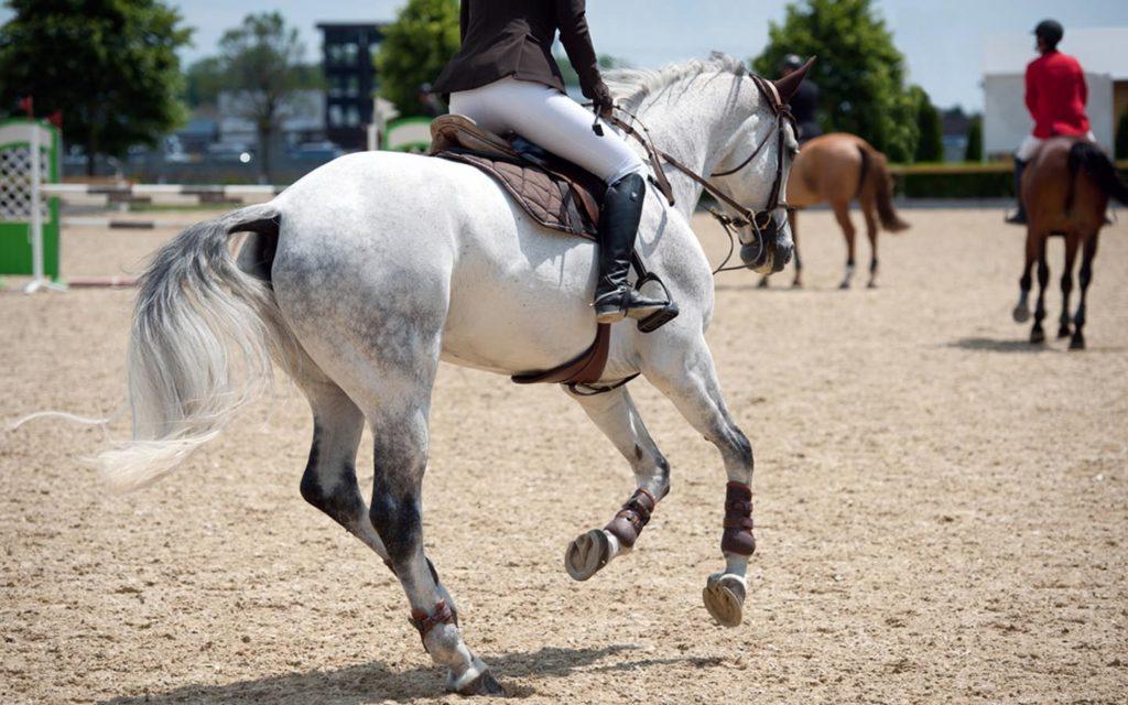 Rider with a horse at Al Ain Equestrian Club near Abu Dhabi