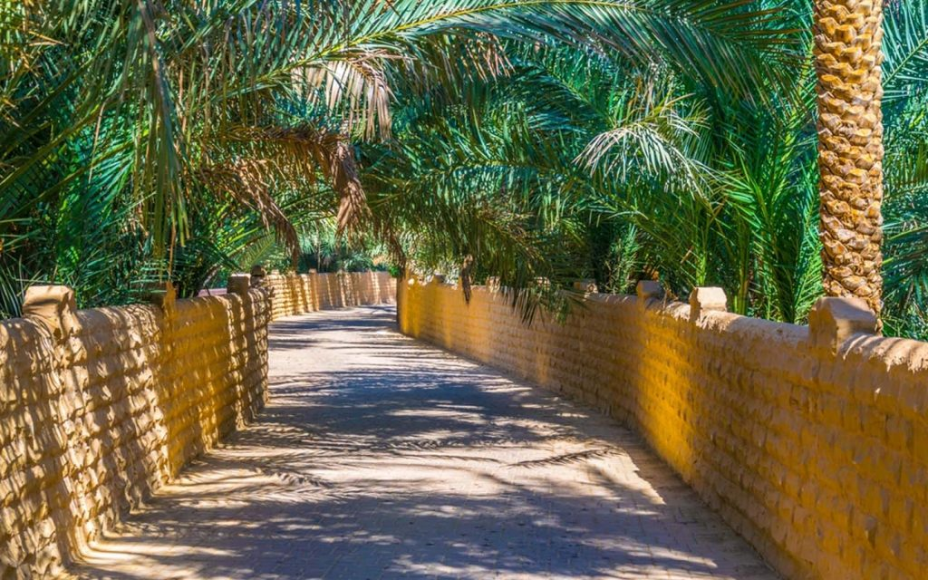 Walkways surrounded by palm trees at Al Ain Oasis
