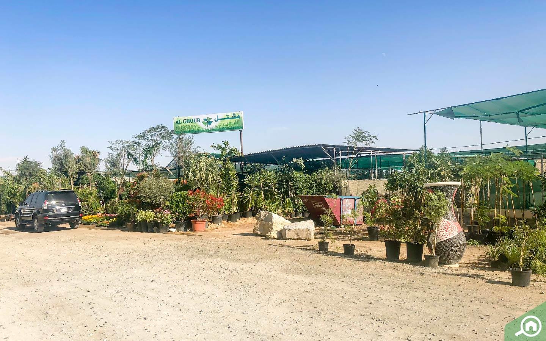 Al Ghoub dubai plant shop