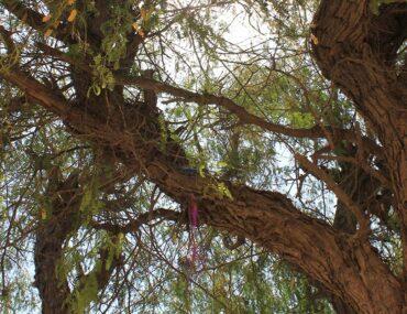 Al Hayer Forest Dubai