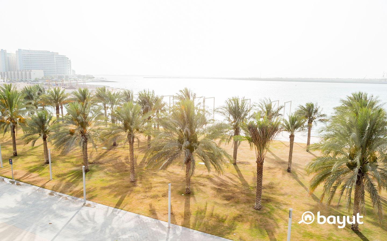 Palm trees in Al Raha Beach