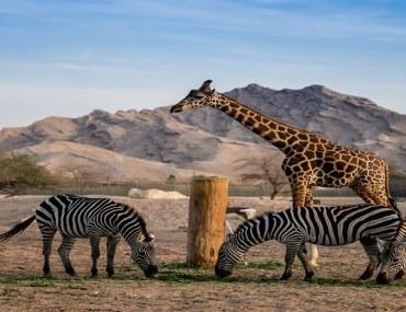 حدائق الحيوان في أبوظبي