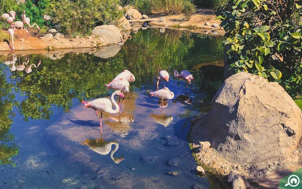 The birds at Al Ain Zoo