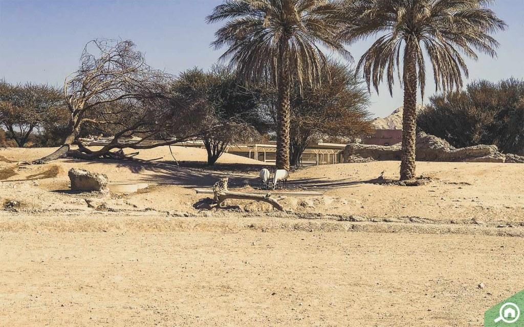 Al Ain Zoo Animals