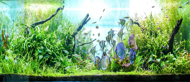 large saltwater aquarium