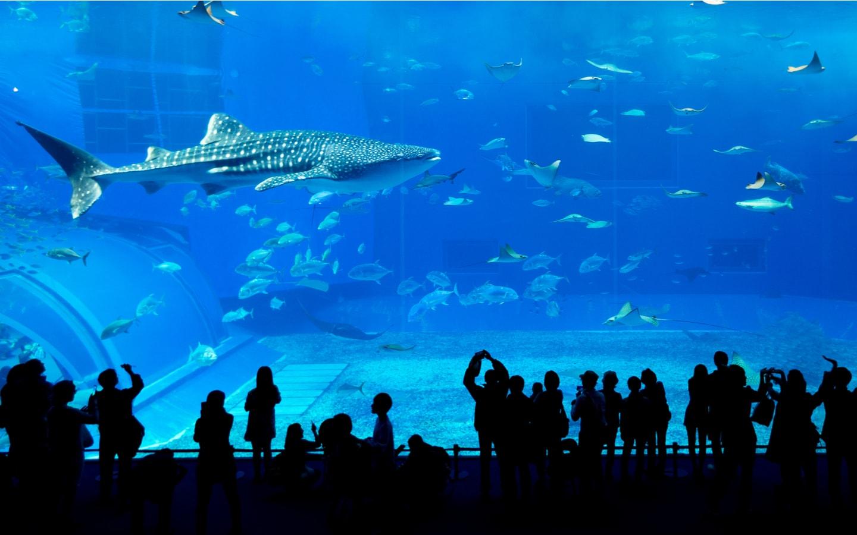 سمكة قرش في دبي أكواريوم