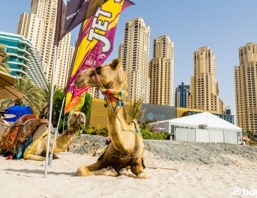 two camels lying on the sand in front of the buildings at JBR Dubai