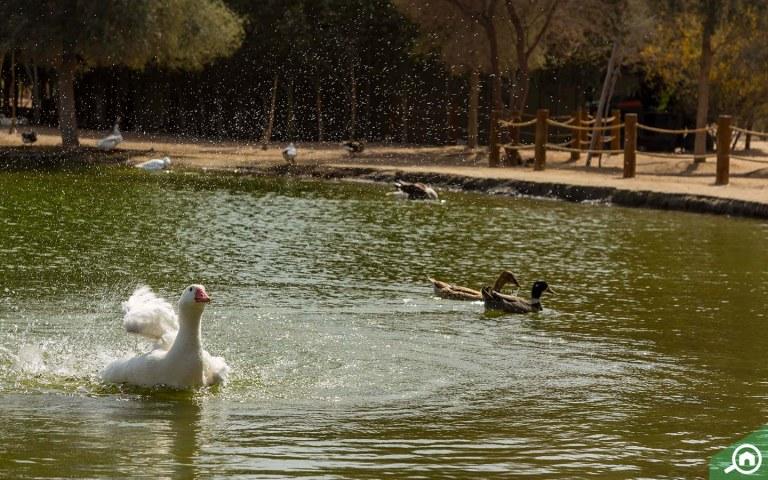 Al Qudra Lake Guide: Love Lake, Camping, Location & More ...