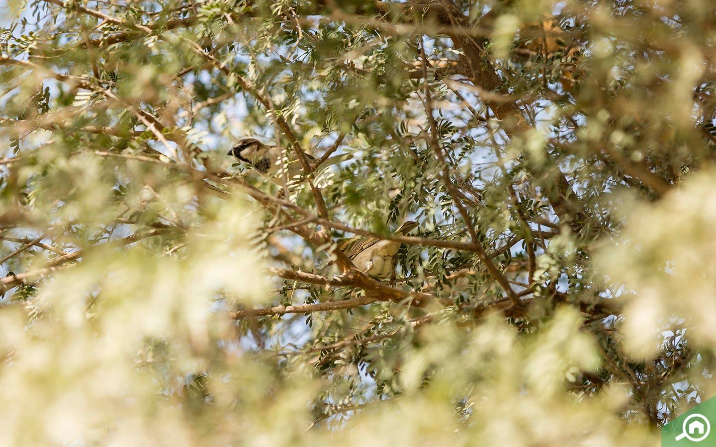 Al Qudra Bird images