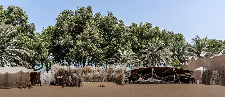 أشجار خضراء في أبوظبي