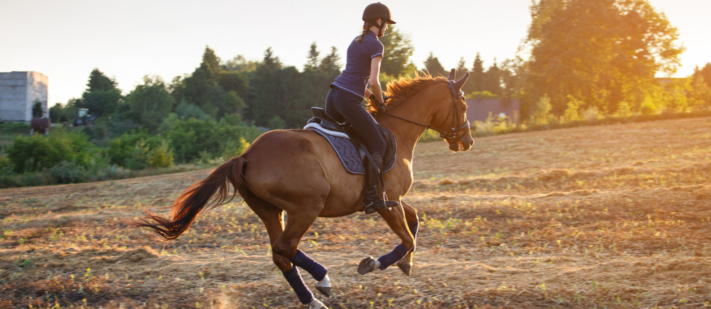 Top Places for Horse Riding Lessons in Dubai for Kids