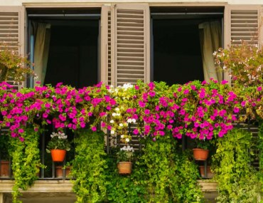 Balcony garden covered with shrubs