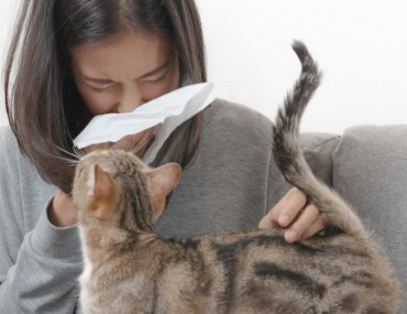 Allergy-proof your home, take steps to get rid of cat dander