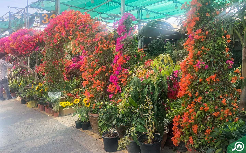 Plant Nurseries In Abu Dhabi Green