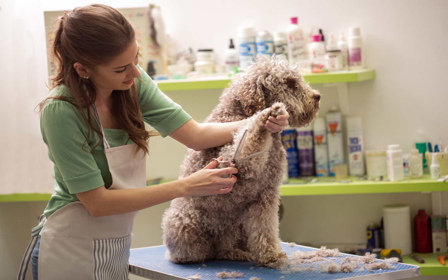 Pet dog being groomed