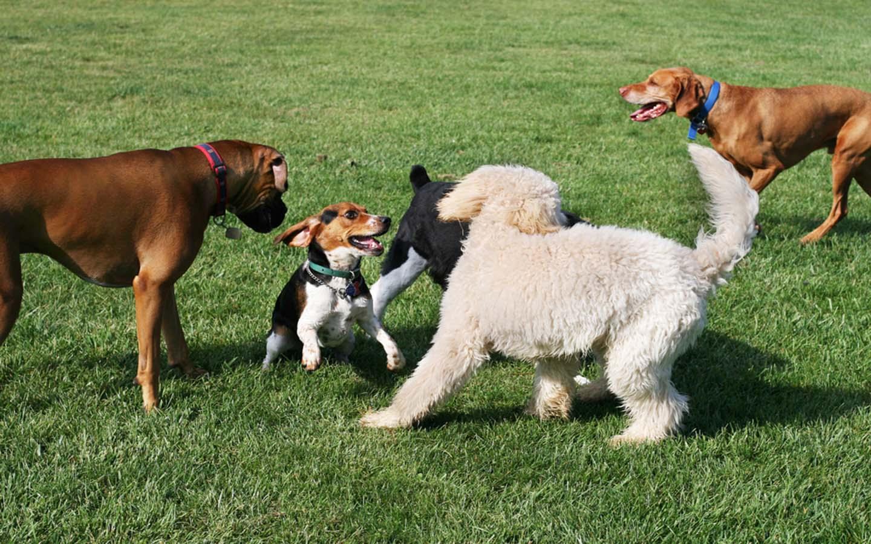حديقة كلاب