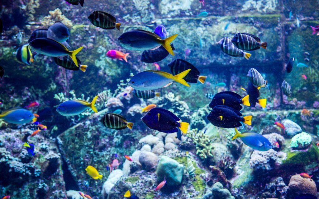 حوض أسماك