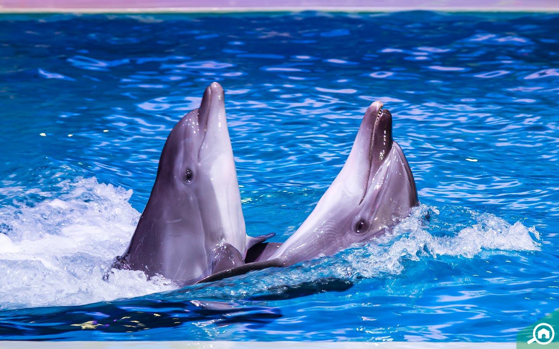 Dolphins in Dubai Dolphinarium