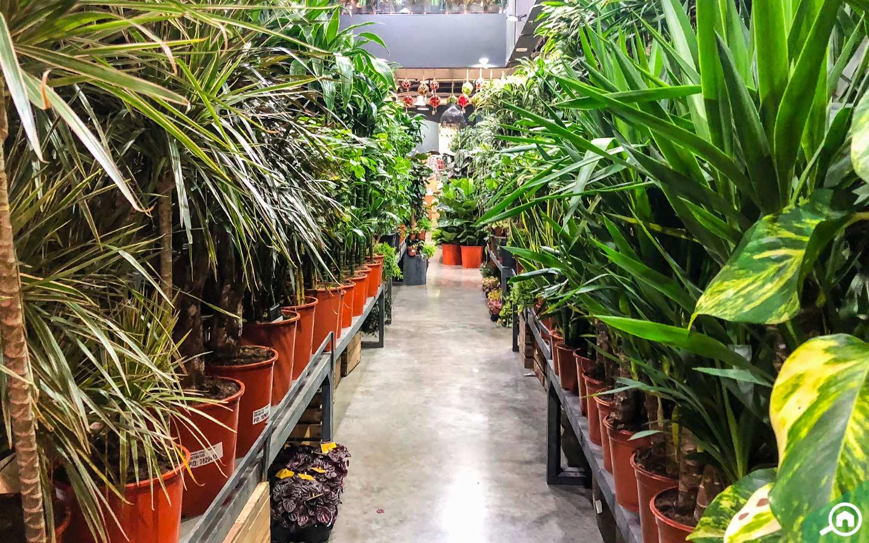 Dubai Garden Centre plants