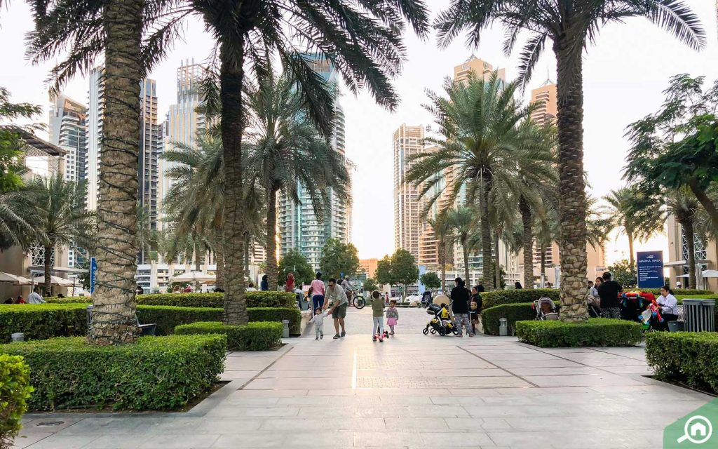 Promenade with trees and landscaping in Dubai Marina