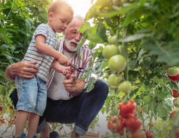 A grand father with his grand child in the Emirates Bio Farm