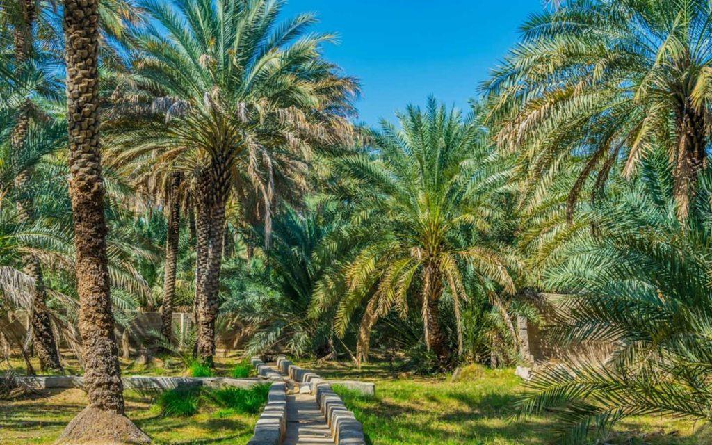 Falaj irrigation system in Al Ain Oasis