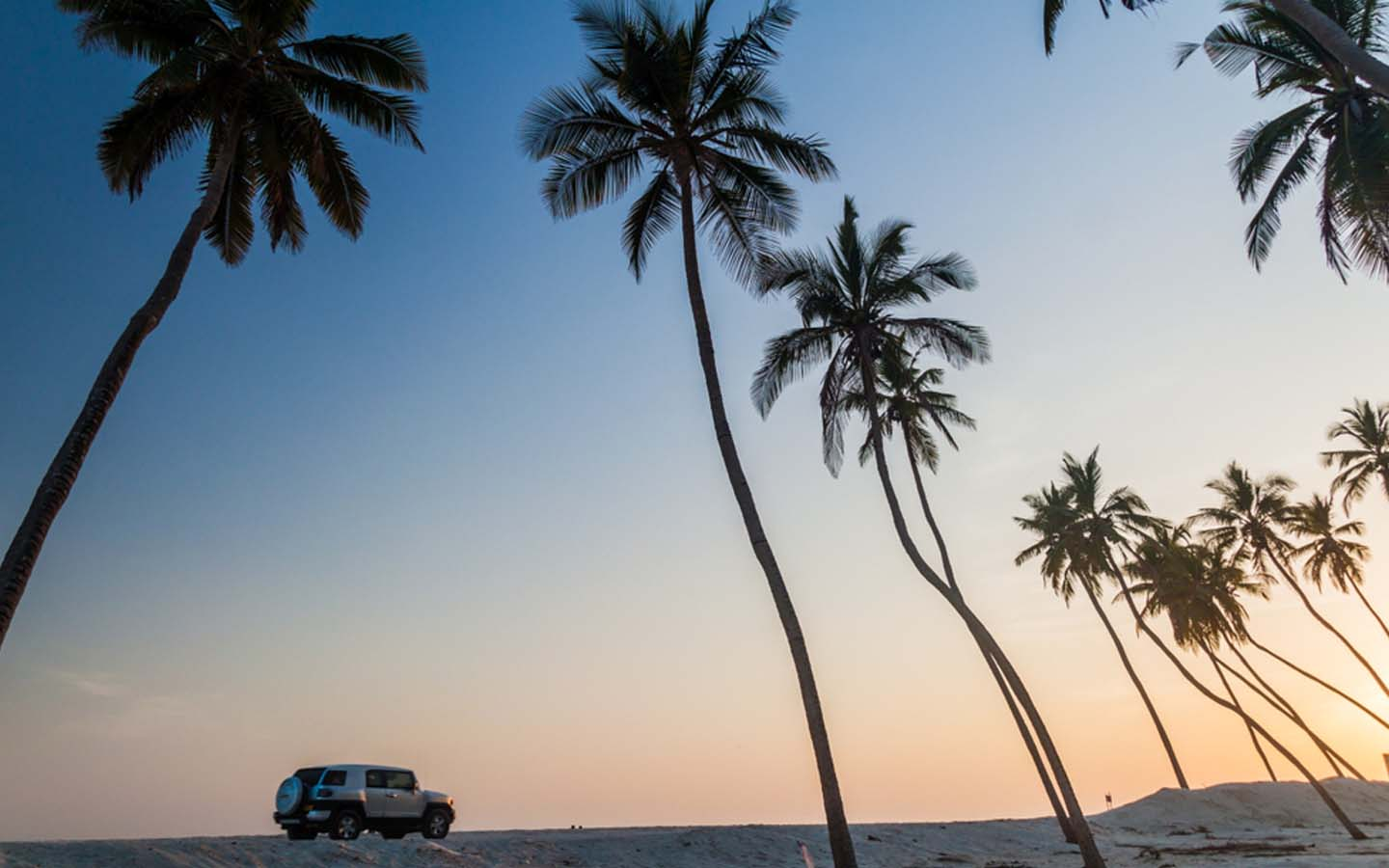 Four-wheel drive vehicle under palm trees in Salalah
