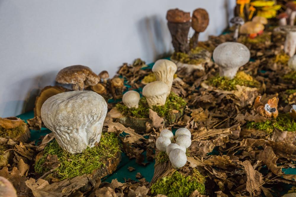 fungi and algae in Botanical Museum