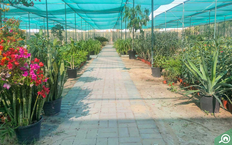Al Warsan Plant Nursery - Green Glades