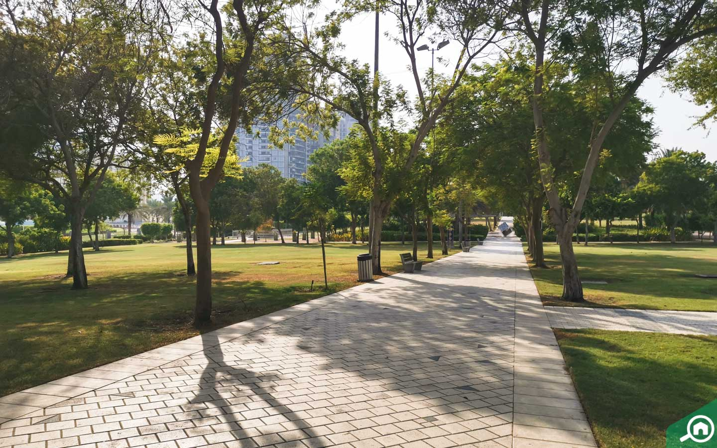 Green pathways at Zabeel park