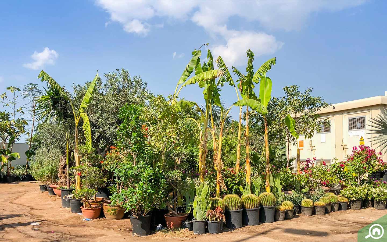 أشكال وأنواع مختلفة من النباتات الداخلية والخارجية