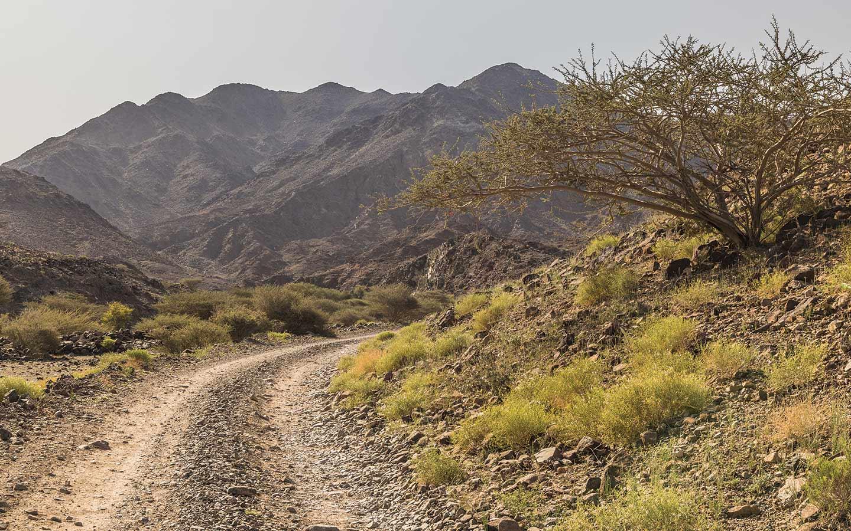 Trails for Mountain Biking in Hatta