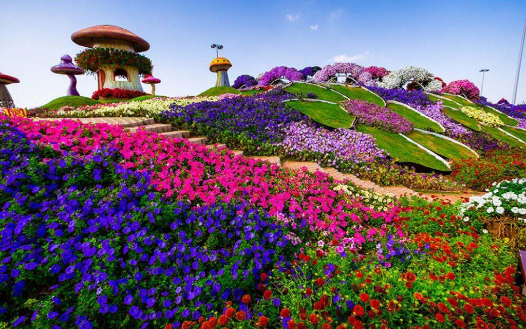 Hill Top at Dubai Miracle Garden