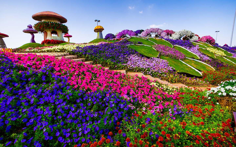 Hill Top at the Dubai Miracle Garden