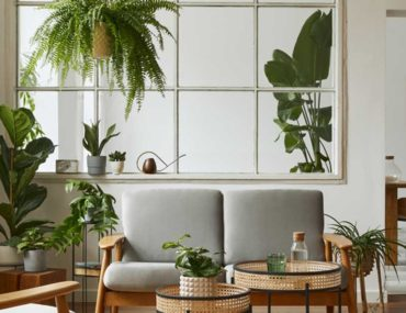 Indoor plants in Dubai house