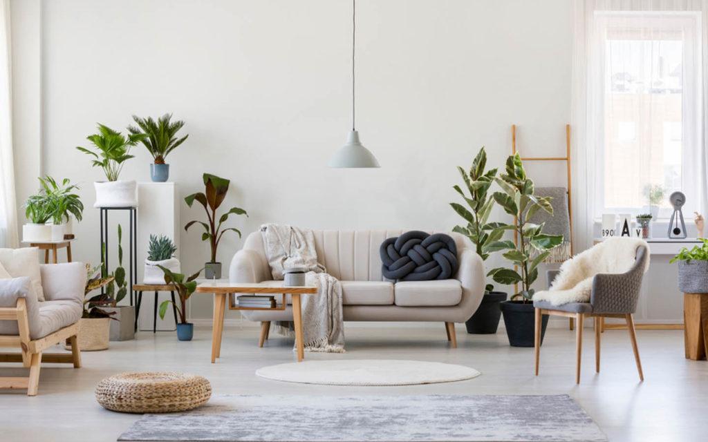 غرفة تضم نباتات