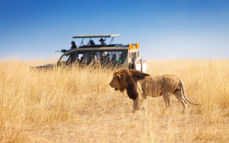 View of safari van spotting a lion in Kenya