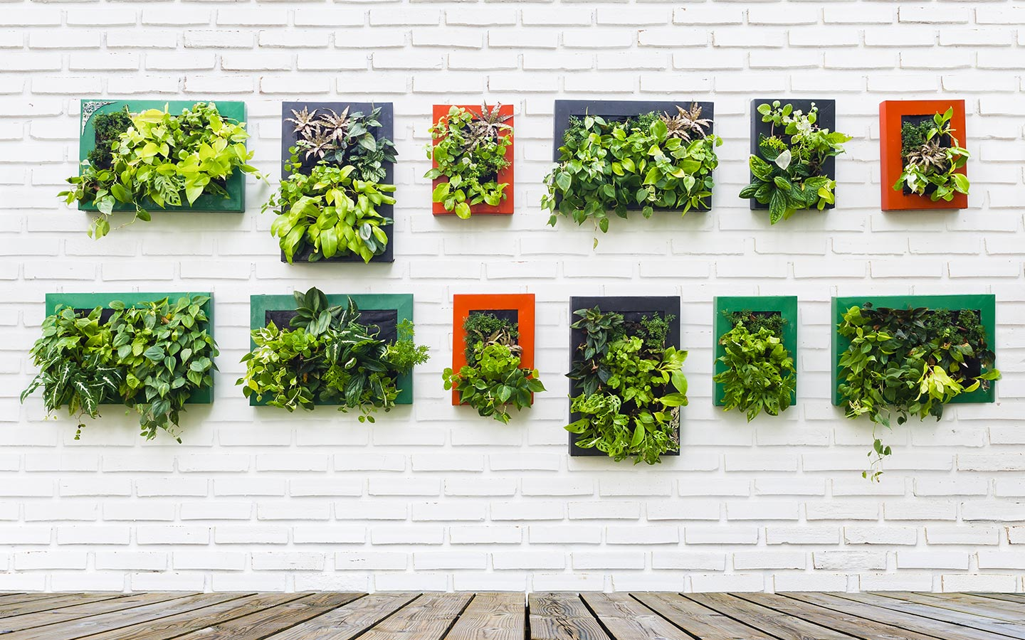 How to make a green wall at home